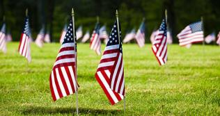 American flags on a green lawn