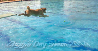 Doggie Day Swim 2014